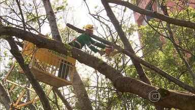 Moradores de bairro de Belo Horizonte protestam contra poda de árvore - Eles pediram a preservação do patrimônio da capital.