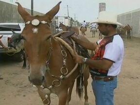 Encontro reúne criadores de mulas e burros em Feira de Santana (BA) - Um encontro reuniu criadores de mulas e burros em Feira de Santana, na Bahia. Muita gente aproveitou a festa para fechar negócio.