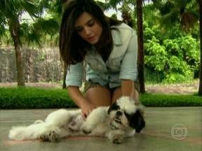 Giovanna Lancellotti apresenta Marley, seu cãozinho - Atriz ganhou filhote da raça Shitsu do namorado