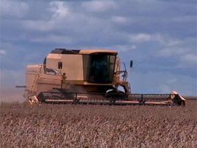 Forte seca prejudica safra de milho no Nordeste - Quebra na safra, em 2012, foi de 90% nos estados nordestinos. Situação afeta os pequenos criadores da região.