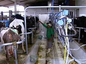 Hormônio ocitocina induz descida do leite do animal - Versão sintética do hormônio é usada para animais com dificuldades. Veja no vídeo como se utiliza a ocitocina no animal e seus efeitos.