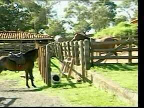 Cavalgada acontece neste fim de semana no Centro-Oeste - São esperados cerca de 500 participantes. Percurso terá cerca de cinco quilômetros.