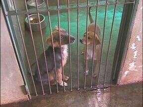 CCZ de Foz tem cachorros para adoção - Se você se interessou basta ligar no número (045) 3524- 5858