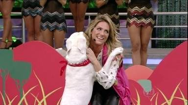 Giovanna Ewbank e Johnny arrasam no Cachorrada VIP - A atriz cumpre o segundo desafio do quadro do Domingão