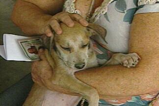Feira de adoção de animais movimenta Parque da Criança em Campina Grande - Ação é resultado de parceria entre ONG e Centro de Zoonoses.