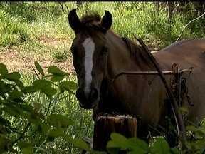 Cavalos são criados ilegalmente no Park Way - Alguns moradores do Park Way estão criando cavalos em uma área residencial, sem autorização da administração. Além disso, os vizinhos denunciam que tem baias dos animais construídas em terrenos públicos.
