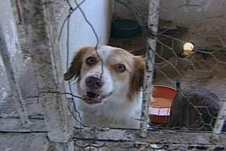 Vários cães e gatos estarão disponíveis para adoção em CG - Adoção dos bichos acontecerá na manhã deste domingo no Parque da Criança.