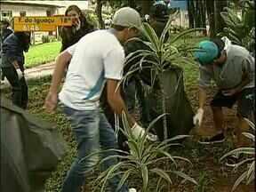 Estudantes de Maringá vão ser voluntários no combate a dengue - Alunos de 120 escolas vão ajudar na limpeza da cidade