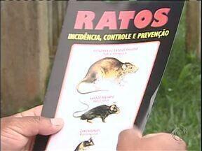 Leptospirose preocupa moradores de Campo Largo - Duas pessoas já morreram por causa da doença neste ano.