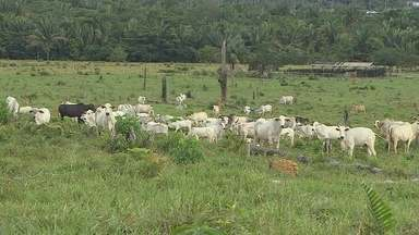 Termo de cooperação é assinado por pecuária sustentável na Amazônia Legal - Objetivo é a não comercialização de carne bovina sem procedência.