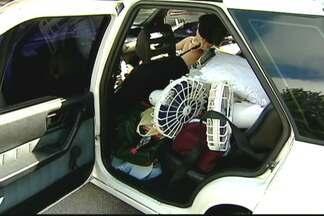 Objeto solto dentro do carro pode virar arma contra passageiro e motorista - Em uma batida a 60 km/h, um objeto que pesa 1 kg é projetado para frente pesando 50 kg. Por isso, é preciso tomar cuidado especial com bolsas, sapatos e outros objetos.
