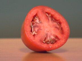 Germinação precoce dentro do tomate é fenômeno raro - William Souza, de Urubici, em Santa Catarina, mandou uma foto de um tomate que estava com as sementes germinando. Consultor do Globo Rural, o agrônomo Chukichi Kurosawa, explica que isso acontece por fatores genéticos e não há problema em consumir.