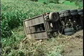 Caminhão carregado com 75 cabeças de gado tombou na BR 386 em Frederico Westpahlen - Metade dos animais morreu