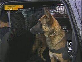 A Polícia e a Guarda Municipal de Foz ganmha reforço de cães farejadores - Ação faz parte da chamada unidade K9.