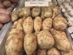 Conheça a misteriosa yacon, que tem gosto de fruta e seu açúcar não engorda - Segundo especialista, a yacon parece, mas não é uma batata. É uma raiz, pode ser consumida crua e tem um tipo de açúcar que o organismo não consegue absorver.