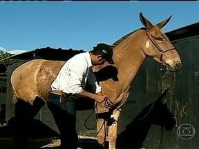 Criadores de cavalos e muares se encontram em Viçosa (MG) - Em Viçosa, na Zona da Mata do estado de Minas Gerais, o final de semana foi de encontro de criadores de cavalos e muares. Os criadores falam da importância do evento.