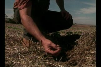 Produtores já pensam nas lavouras de trigo - O Estado deve ter aumento na área cultivada