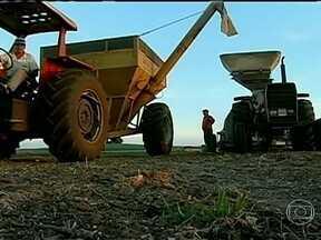 Agricultores gaúchos se preparam para plantio do trigo - Agricultores gaúchos se preparam para o plantio do trigo. O trabalho nas propriedades começou antes mesmo do fim da colheita de soja.