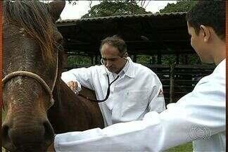 Alunos de veterinária ensinam carroceiros a cuidar dos cavalos, em Anápolis - Um projeto do curso de medicina veterinária de uma faculdade de Anápolis ajuda carroceiros a cuidarem melhor dos cavalos. No hospital, os animais também recebem atendimento quando estão doentes.
