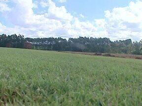 Assista ao 2º bloco do Caminhos do Campo do dia 05 de maio - Conheça uma produção de grameira e aproveite 'dicas verdes' para cuidar da grama do seu quintal