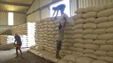 Distribuição de milho não chega aos agricultores do Ceará - Estado sofre a pior seca dos últimos 50 anos.