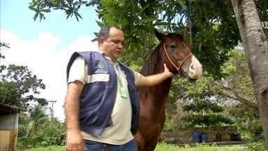 Grande Fortaleza tem surto de mormo, doença que afeta cavalos - Surto fechou 14 estabelecimentos na Grande Fortaleza.