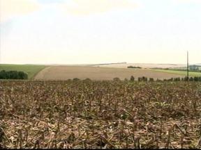 Agricultores começam a preparar o plantio da safra de inverno no RS - O momento é de preparo para o plantio da safra de inverno nos campos gaúchos. Em muitas propriedades, as terras estão prontas para receber as sementes de aveia, centeio e cevada.