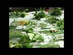 Oficina em Vassouras, no RJ, ensina como preparar chás com ervas medicinais - As plantas fazem parte da tradição de muitas famílias, mas é preciso ter cuidado na hora de usá-las.