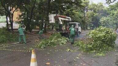 Árvores caem e interditam trânsito em avenidas do Recife - Visconde de Jequitinhonha e Rua dos Palmares precisaram ser interditadas. Galhos no meio da pista obstruíram passagem de carros e pedestres