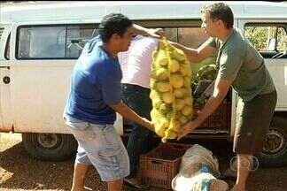 Projeto ajuda pequenos agricultores a produzir hortaliças e frutas, em Goiás - Com orientações de especialistas, os pequenos produtores rurais conseguiram aumentar a produtividade em um povoado da Cidade Ocidental.