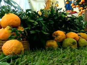 Festa celebra colheita da tangerina ponkan em Minas Gerais - Em Tocantins, Minas Gerais, tem festa pra comemorar a colheita da tangerina ponkan. O cultivo da fruta é fonte de renda pra mais de 150 famílias.