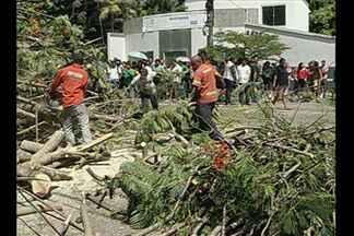 Queda de uma árvore mata uma pessoa e deixa três feridos na capital - Queda de uma árvore mata uma pessoa e deixa três feridos na capital