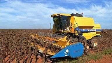 Cultivo de girassol cresce em Mato Grosso - Enquanto no Brasil a área plantada de girassol diminui, em MT as lavouras estão maiores nesta safra, representando mais de 70% do cultivo no país. O processamento do grão para extração do óleo é o principal estímulo dos produtores do oeste do estado.