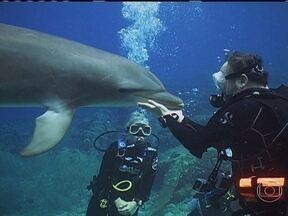 Equipe do Globo Mar mergulha com golfinhos no mar do Caribe - No mar de Curaçao, os golfinhos encantaram o repórter Ernesto Paglia. Para ele, os animais fazem as pessoas se sentirem especiais ao darem a honra de se aproximarem.