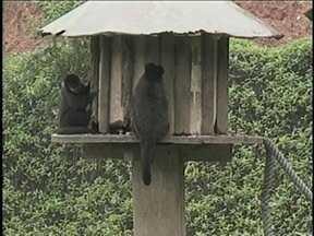 Reforma no Parque Zoobotânico de Joinville impacta na rotina dos animais - Reforma no Parque Zoobotânico de Joinville impacta na rotina dos animais ; bichos vão ser relocados para novo endereço