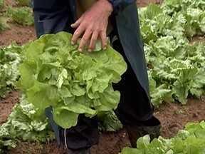 Frio e chuva prejudicam produtores de hortaliças - Frio e chuva prejudicam produtores de hortaliças