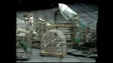 Polícia Ambiental apreende pássaros silvestes no Norte do ES - Mais de 20 aves foram apreendidas em Sooretama.