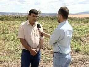 Universidade pesquisa alternativas de nutrição de solo e fertilizantes para os cerrados - Os estudos ajudam os produtores a terem uma melhor produção com menor custo.