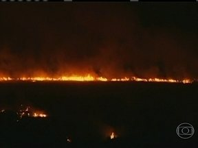 Incêndio em Buenos Aires pode ter sido criminoso - Fogo arrasou parte da Reserva Ecológica Castanera Sur, às margens do Rio da Prata. Os bombeiros levaram mais de duas horas para controlar o incêndio. Parque é uma área verde importante da capital argentina.