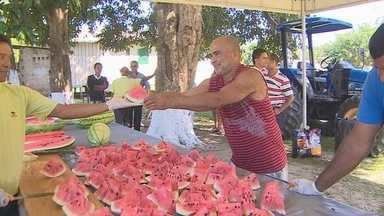 Festa da Melancia em distrito de Porto Velho mostra potencial econômico da região - Maior parte da produção de melancia é vendida para o Amazonas.