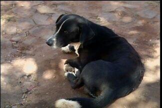 Cidades do Cariri combatem crimes contra animais - Cidade recolhe animais apreendidos após serem abandonados.