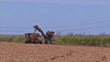 Colheita de cana avança no Oeste do estado. - Porém, os produtores reclamam que os custos de produção subiram muito e os rendimentos, não.