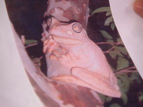 Correção: animal mostrado em reportagem era perereca da espécie Hypsiboas Faber - O animal apareceu na chácara da telespectadora Lilian Moreira e foi mostrado no programa da semana passada.
