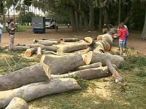 Prefeitura promete intensificar a fiscalização após tragédia no Parque da Redenção - Uma pessoa morreu e três ficaram feridas após queda de árvore.