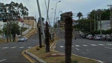 Plantas morrem nos altos da avenida Afonso Pena em Campo Grande - As palmeiras foram plantadas há menos de um ano, o mesmo vem acontecendo em outro pontos da cidade