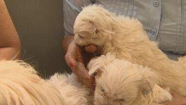Polícia recupera dez cães roubados de chácara em Ribeirão Preto, SP - Ao todo, 39 animais foram levados de propriedade.