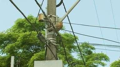 Galinha aparece em fios de alta-tensão em avenida de Poços de Caldas - Animal foi retirado dos fios e levada para o galinheiro de morador do bairro.