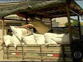 Criadores do sertão do Ceará esperam três meses para receber milho subsidiado pelo governo - Os criadores de Ibicuitinga enfrentaram a longa espera porque o grão estava parado nos armazéns desde junho. A distribuição atrasou por problemas no transporte.