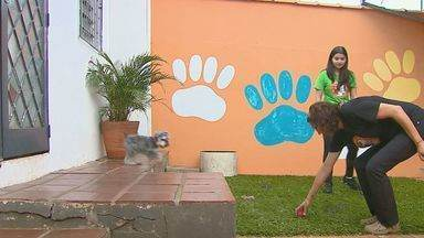 Creches para cachorros é opção para bem estar de animais - Mensalidade para cães fica em torno de R$ 300.