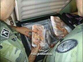 Polícia florestal apreende 49 quilos de peixe em Foz do Iguaçu - Três comerciantes foram presos.